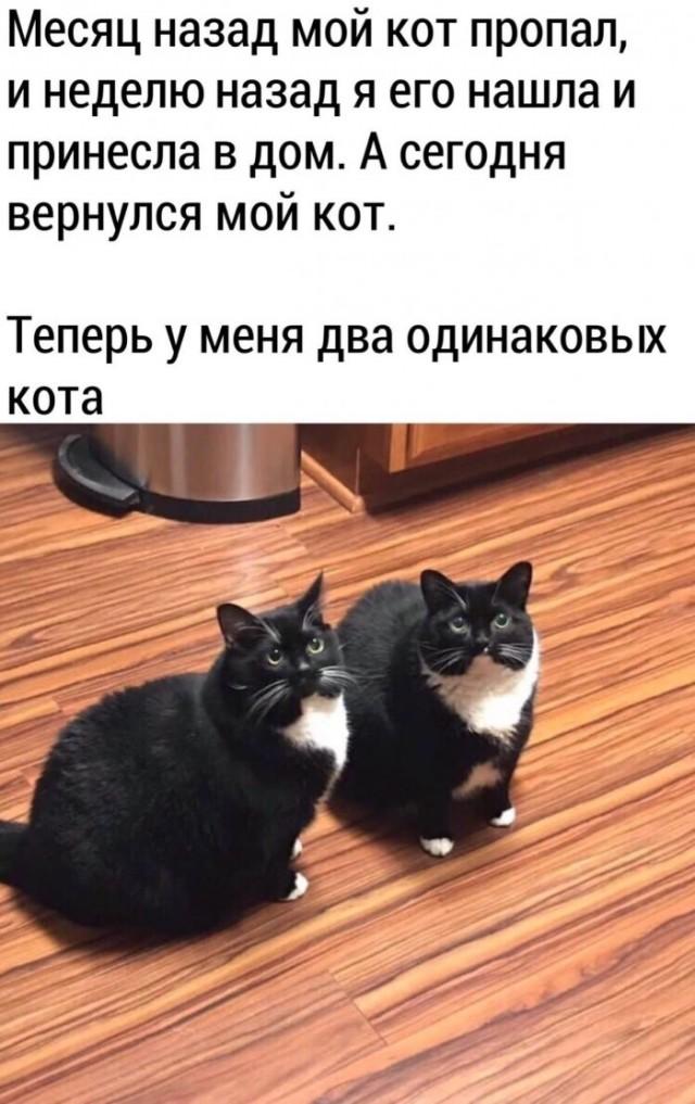 Анекдоты Про Котов Смешные