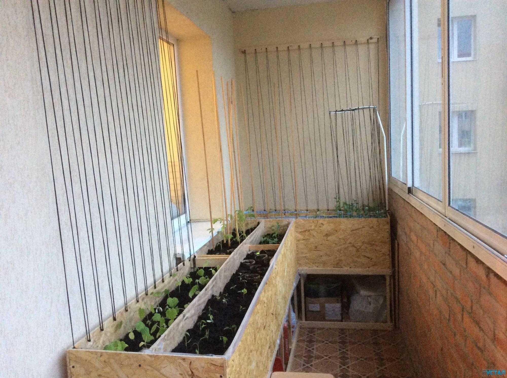 Зелень на балконе - хитрости жизни.