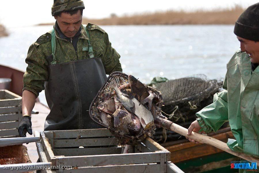Как ловят рыбу профессиональные рыболовы
