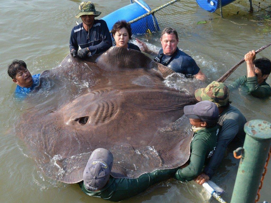 Невообразимо громадные животные, которые на самом деле существуют