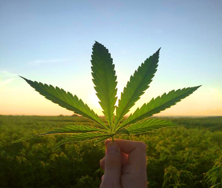 марихуана наше все серии