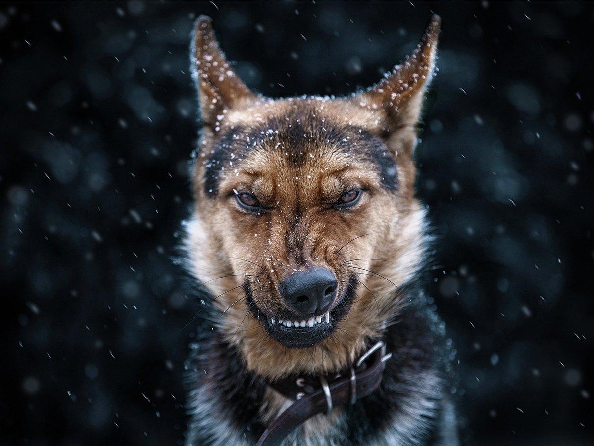 новый злобные морды волков фото поэтому советуем