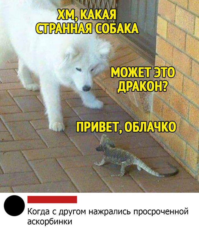 1578837940_kommentarii-iz-socialnyh-sete