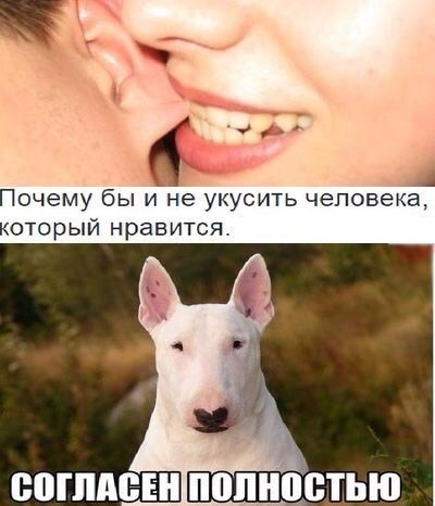 1584329197_14031628.jpg