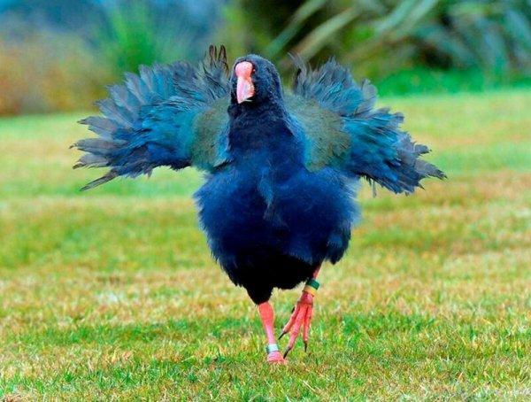Птица, которая воскресла 3 раза Животные