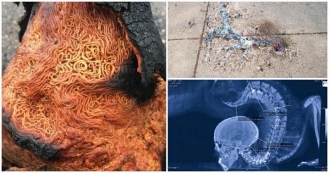 Удивительные явления из нашего мира в интересных фотографиях С миру по нитке