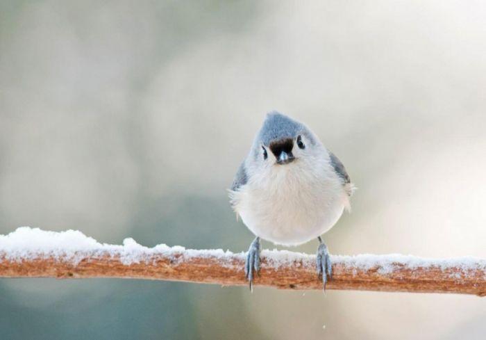 Почему птицы не падают, когда спят на ветке Животные