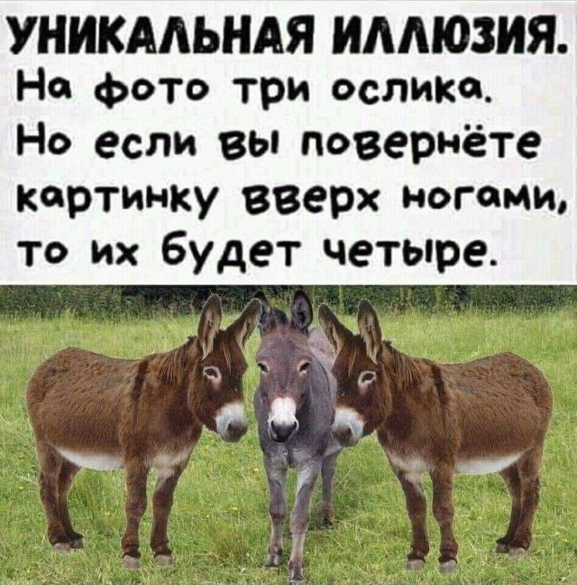 1592306390_14395063.jpg