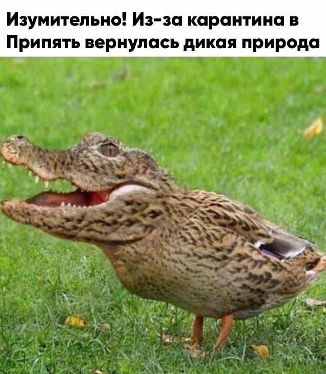 1593512388_14453276.jpg