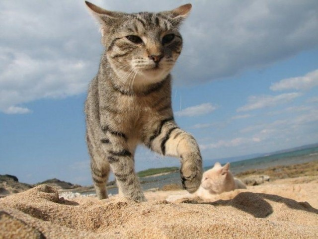 В Италии есть кошачий пляж, покоривший тысячи туристов Животные
