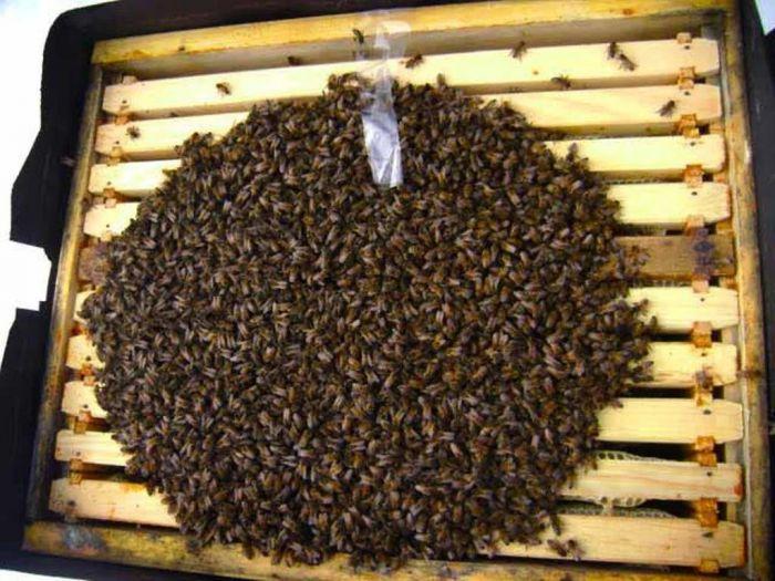 Куда пропадают все насекомые осенью Животные