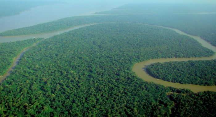 Действительно ли леса - это легкие планеты С миру по нитке