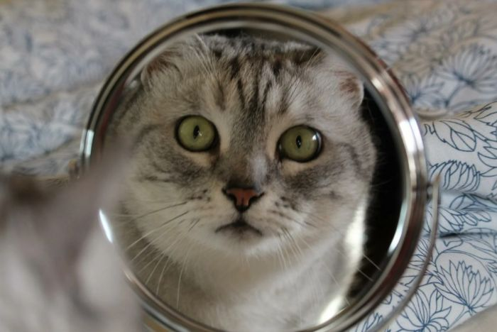 Узнают ли животные себя в зеркале Животные