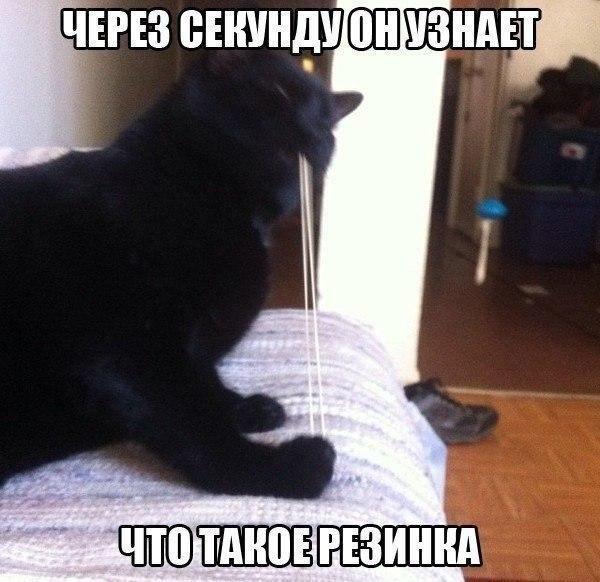смешные картинки и мемы