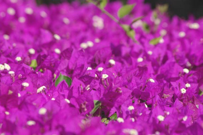 """Почему говорят """"А мне фиолетово"""" С миру по нитке"""