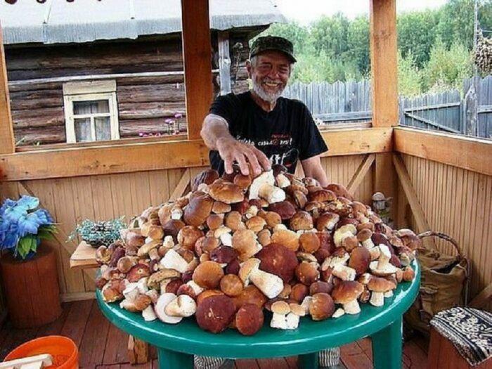 Почему финны не собирают грибы С миру по нитке