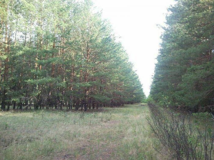 1619349207 v sssr sozdavali lesa v forme slov 7