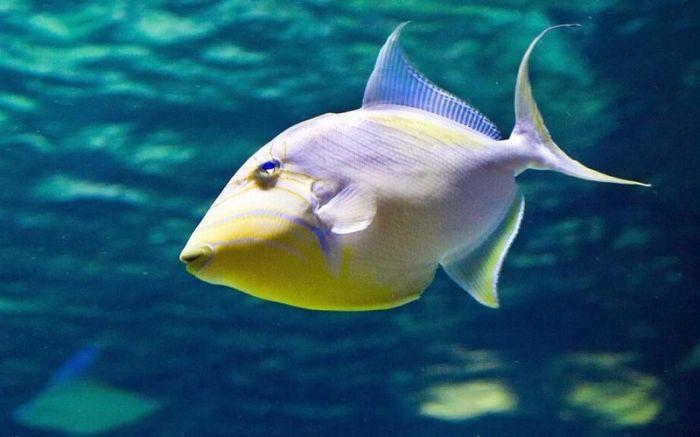 1619931483 li ryby vodu 1