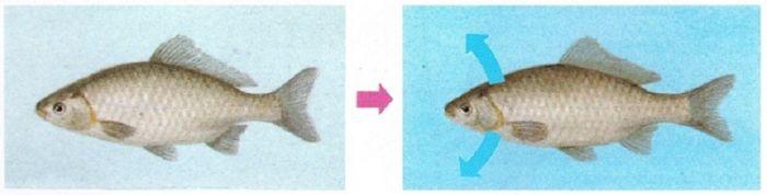 1619931516 li ryby vodu 3