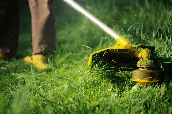 Почему трава вызывает зуд С миру по нитке