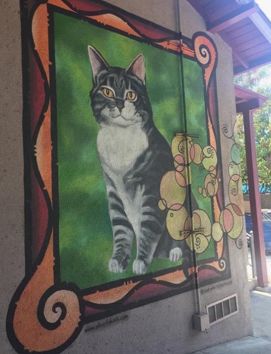 Ученый кот по кличке Восемь Животные